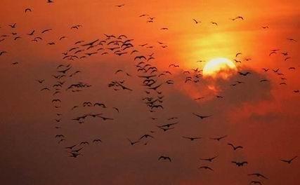 oiseauxciel.jpg