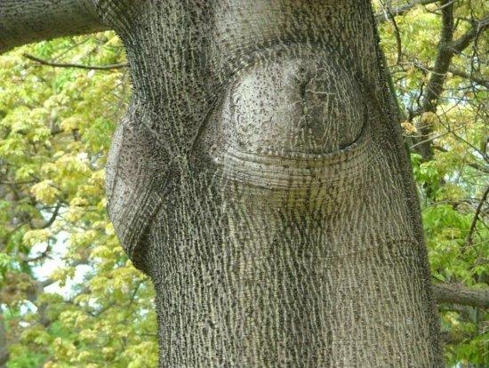 arbresinsolitesautresarbrespalermeitalie2880517841319779.jpg