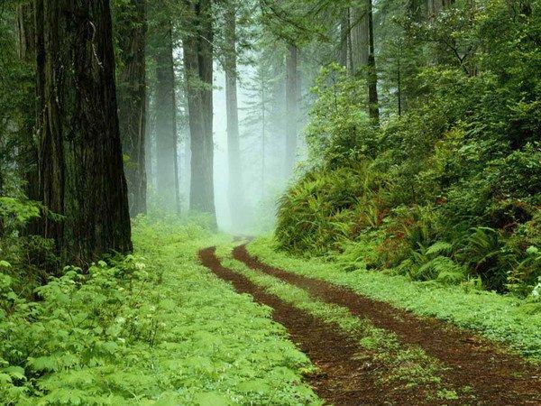 Le sentier est unique pour tous dans La Vie (116) 1754e2f2