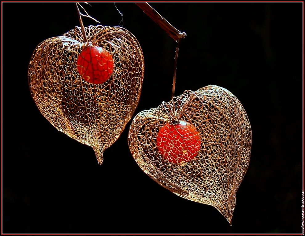 l amour en cage bel automne at va ou ton coeur te porte. Black Bedroom Furniture Sets. Home Design Ideas