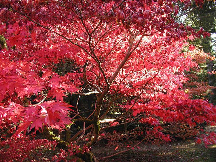 autumnwestonbirt750pix.jpg