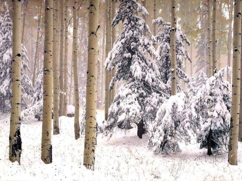 neige66063.jpg