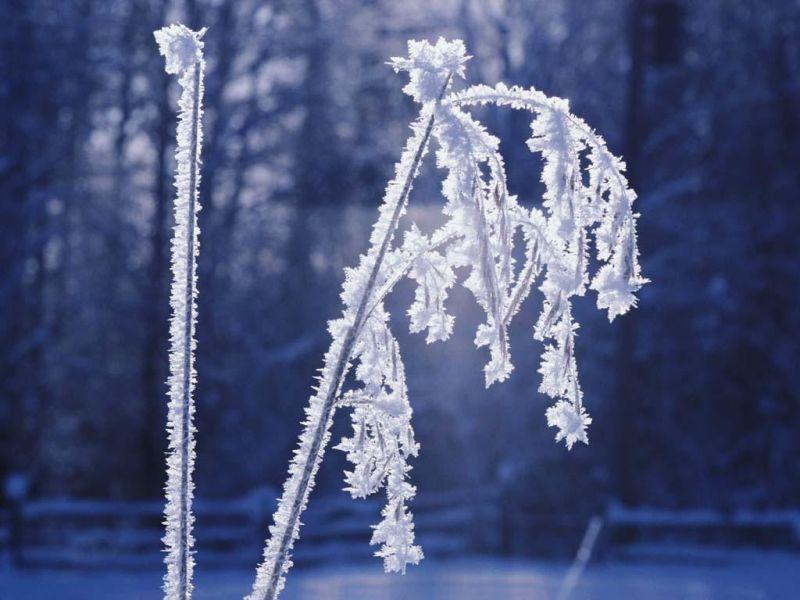 neige66073.jpg