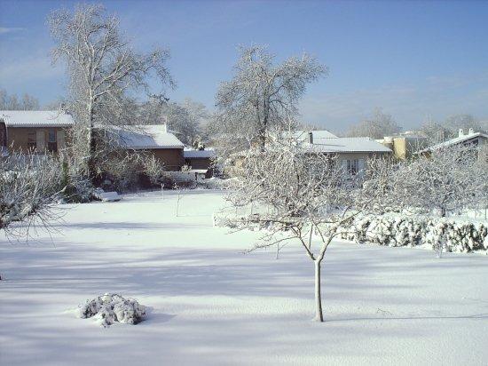 neigesneigesautresarbrescarbonblancfrance5155298114948644.jpg