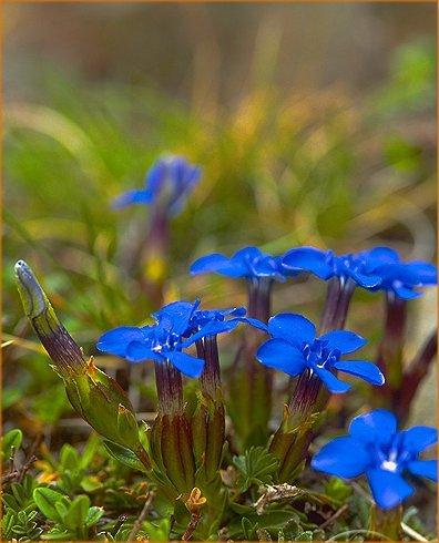 fleurspyrnes1.jpg