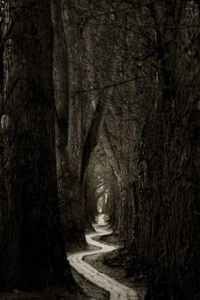 On rencontre sa destinée souvent par les chemins que l'on prend pour l'éviter