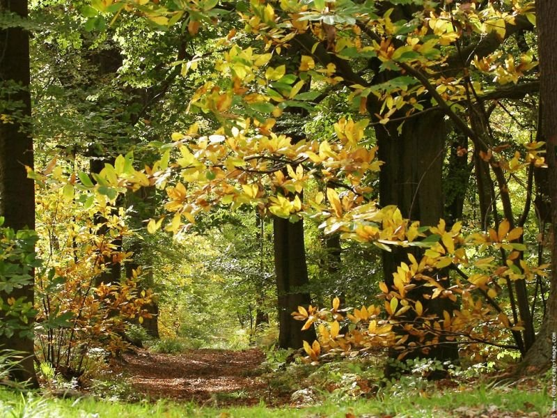 paysagefondecranautomne25.jpg