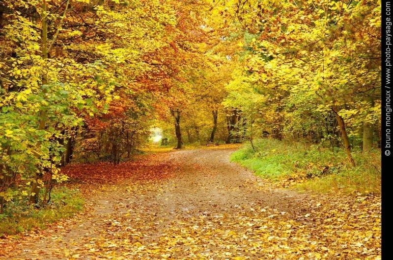 automne10.jpg