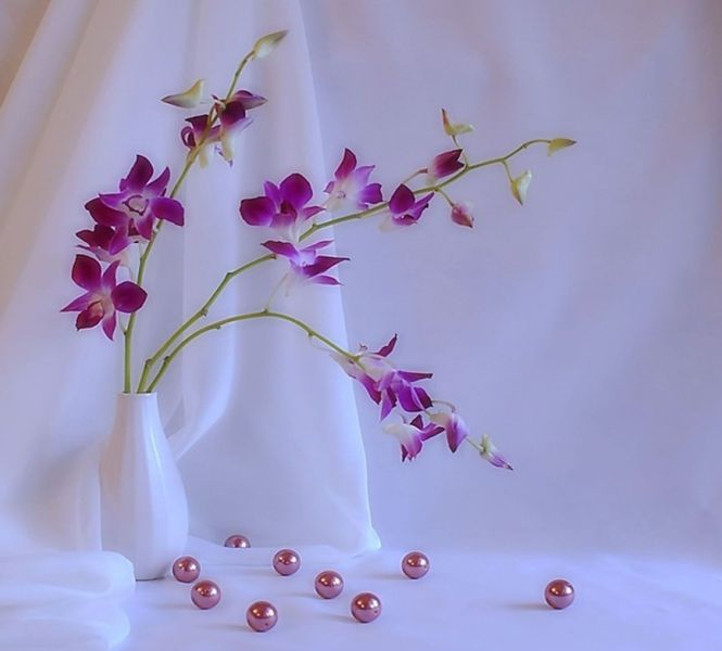 fleurpuresvoileblanc.jpg