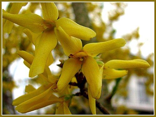 Fleurs-de-printemps.RD-2-