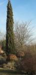 chêne-cyprès-72x150 dans Amour (119)