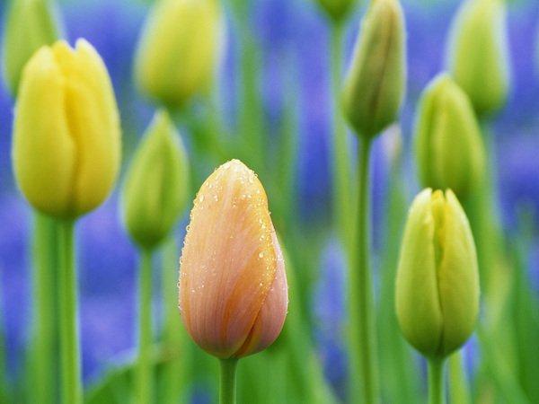 fond-ecran-fleurs-de-printemps