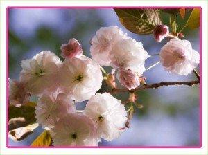 Fleurs de fruit, sauriez-vous les reconnaître ? ... dans PPS imagePPSfleurs-de-fruits-300x224