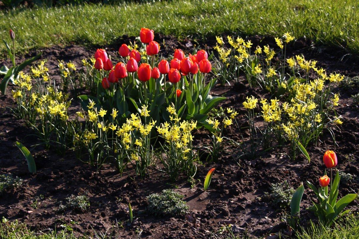 lit-de-la-fleur-de-printemps-1244207165_89