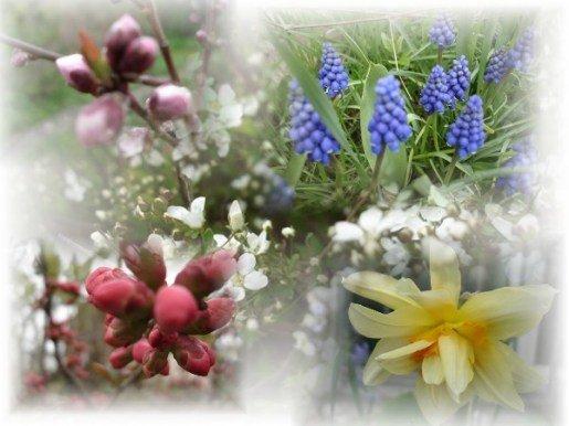 Quiconque a semé des privilèges ... dans Citations, proverbes... printemps011-1