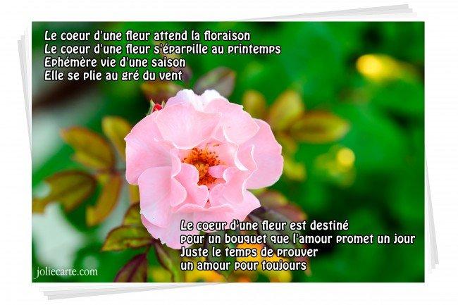 Le coeur d'une fleur ... dans Poésies, Fables, contes, ... (171) coeur-fleur