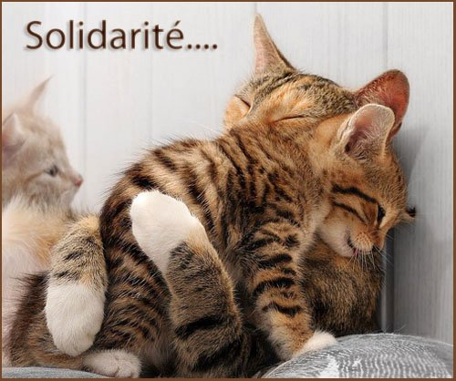 L'amitié n'est pas une simple formule ... dans Amitiés (74) solidaire