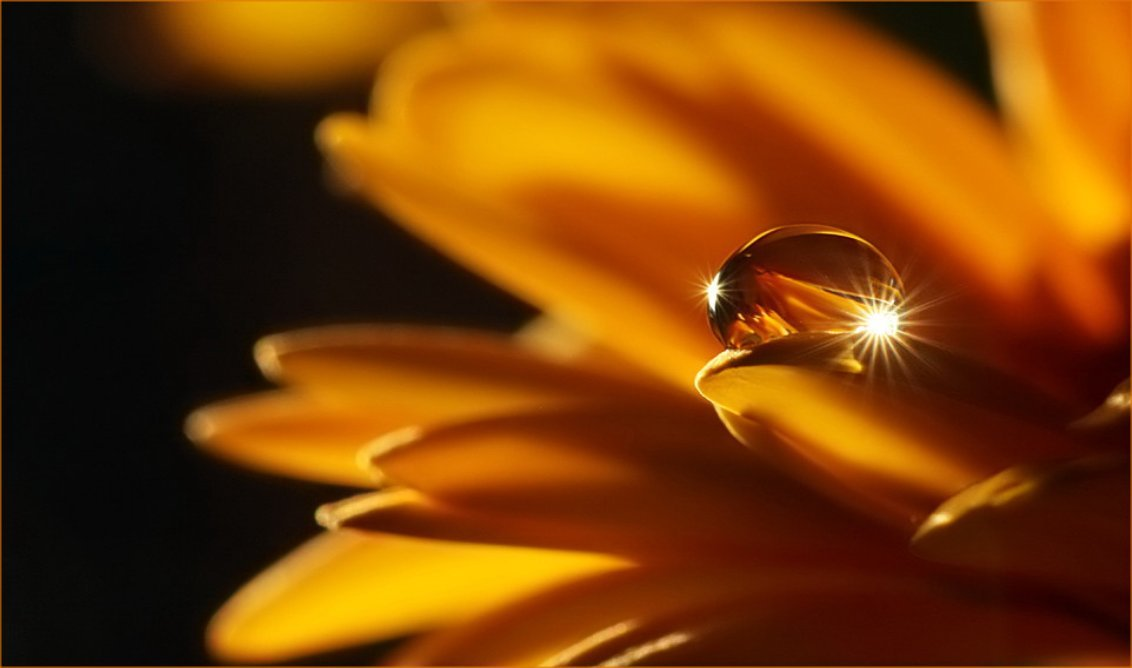 Savoir conjuguer le Présent, le Passé, le Futur ... pas si Simple que ça ! dans Textes à méditer (239) coeur-dune-fleur