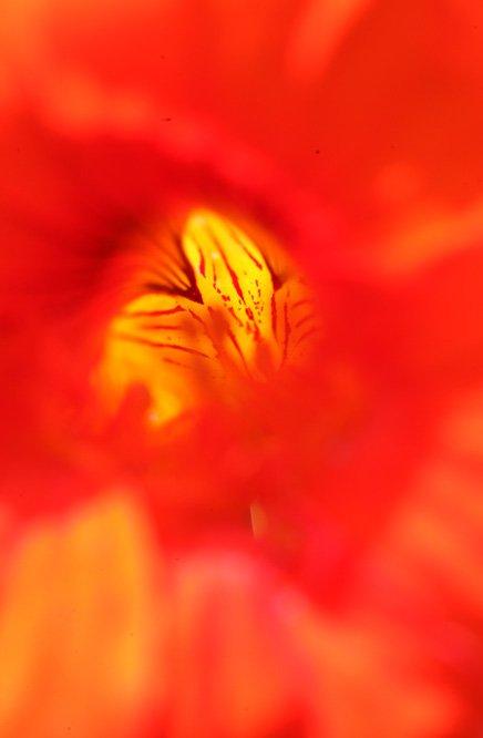 Les pétales du coeur ... dans Citations, proverbes... fleurmagique_gr