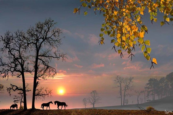 photo-igor-zenin-19
