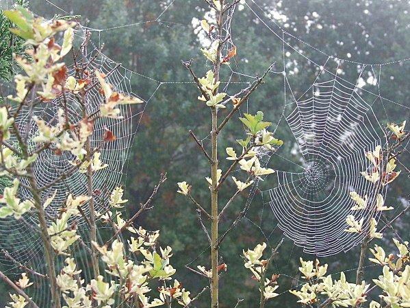 « Le temps, c'est la toile dont je suis à la fois l'araignée et la mouche. » Jacques Lesourne dans Citations, proverbes... 01067282