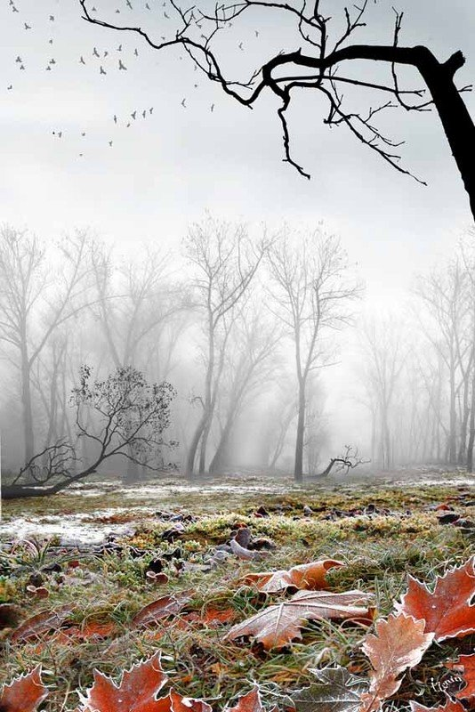 photo-igor-zenin-40 dans Les Saisons (115)