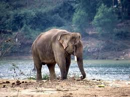 L'ELEPHANT QUI PERDIT SON OEIL dans Textes à méditer (239)