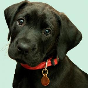 Devinez les émotions de votre chien ... dans Arche de Noé 78a253a4-300x300