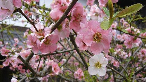 Rencontre avec le printemps ... dans Poésies, Fables, contes, ... (171) 4394123936_b0b173ec52