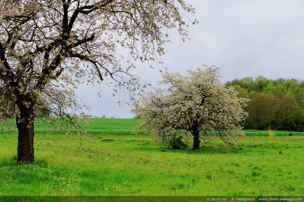 normal_arbre-en-fleur-dans-un-champs