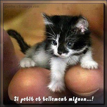 carte-chaton-si-petit-et-tellement-mignon