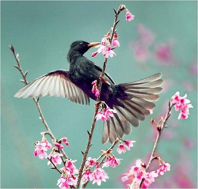 Soyez comme l'oiseau ... dans Citations, proverbes...