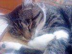 Les chats sont des êtres faits pour ... dans Les Chats (55) dsc00563-150x112