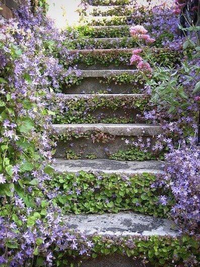 Le sage n'est pas celui qui sait beaucoup de choses, ... dans Citations, proverbes... escalier-fleuri