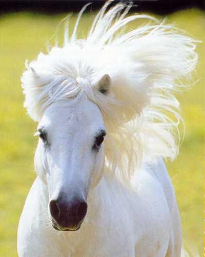 Le conte du petit poney ... dans Poésies, Fables, contes, ... (171) poney