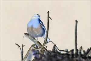 Dessine-moi un oiseau ! dans Textes à méditer (239) dessinemoi1oiseau-300x200