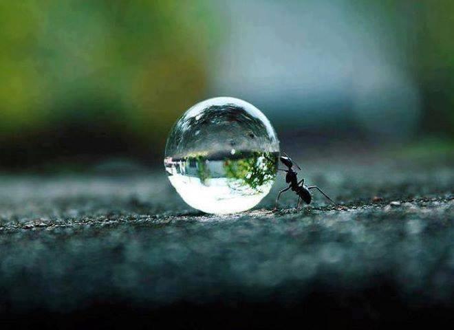 La fourmi ... dans Citations, proverbes... 1003134_569464626450779_235304030_n