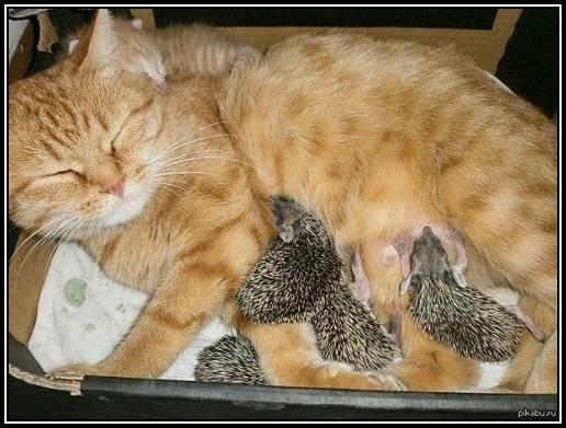 chat-herissons-2 dans Arche de Noé