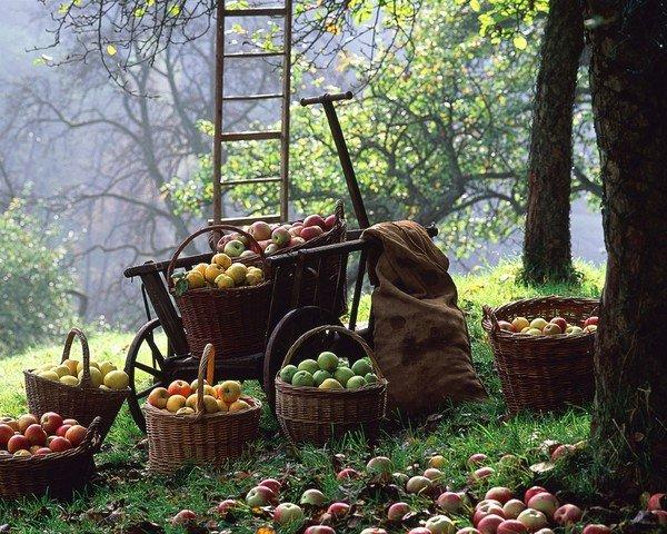 Une pomme par jour ... dans Citations, proverbes... e21bfcd0