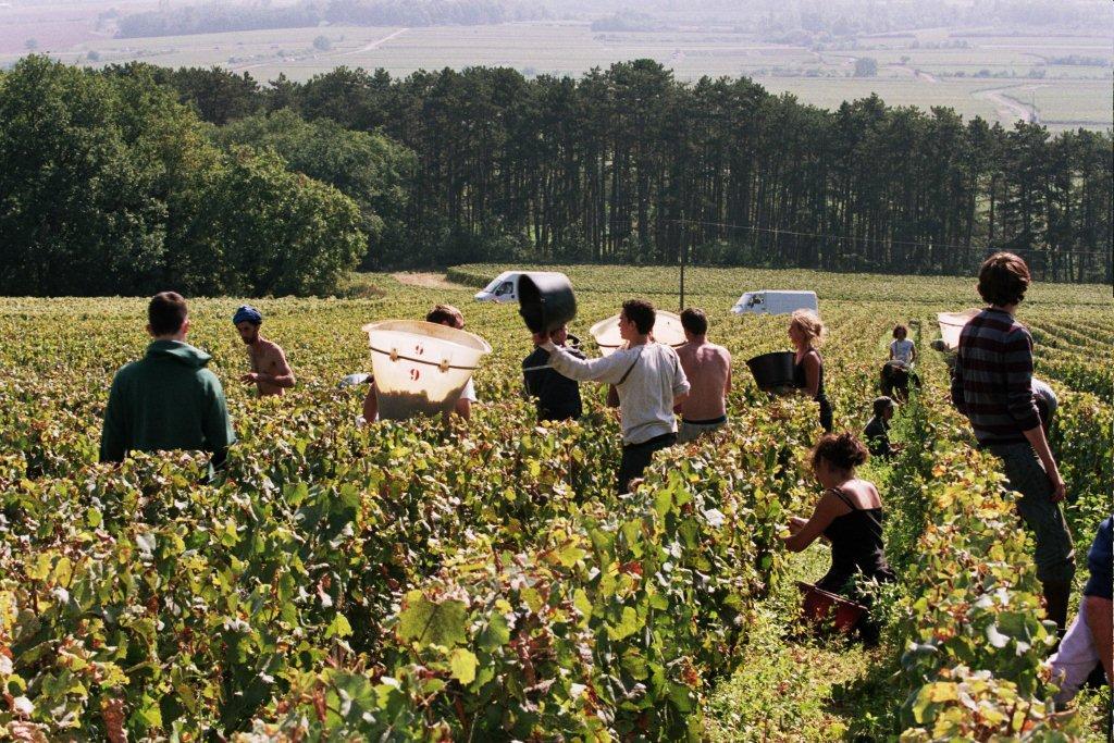 galerie-vendangeurs-dans-les-folatieres-vendredi-7-septembre-vendanges-2007-620