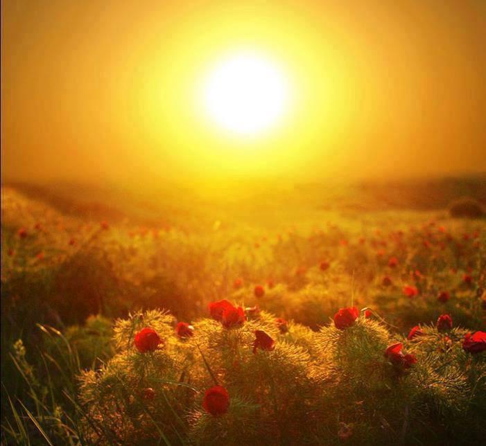 soleil sur champ