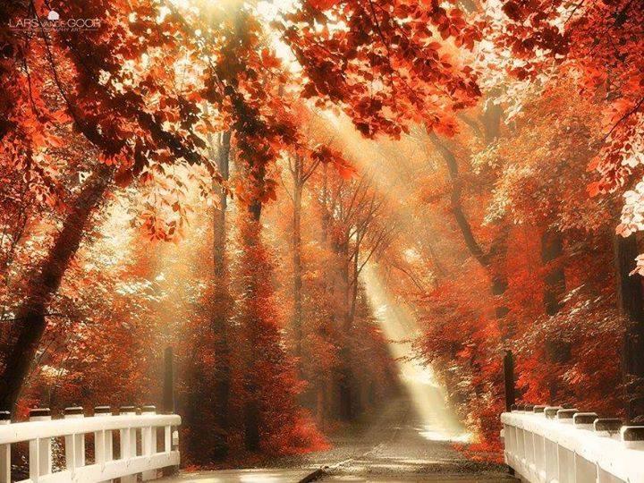 automne irréel