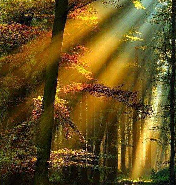 rayons soleil forêt