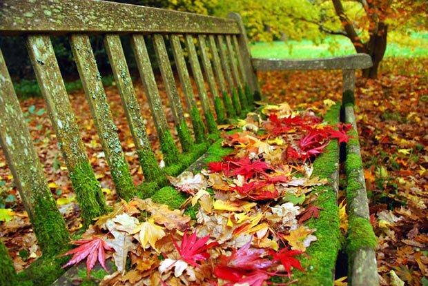 readers-autumn-ben_2010543i