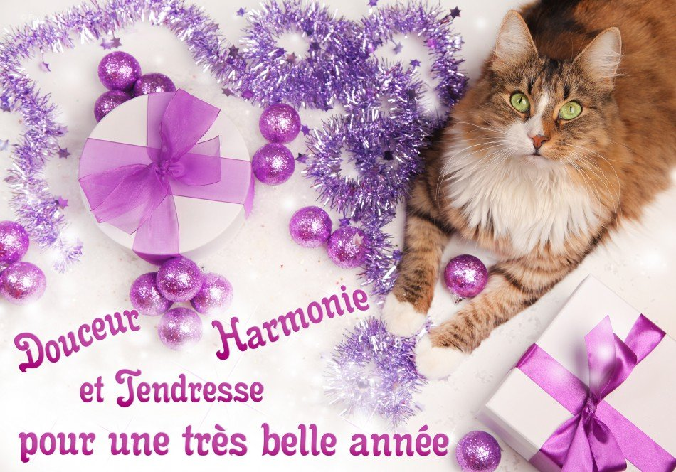 chat-douceur-harmonie-tendresse