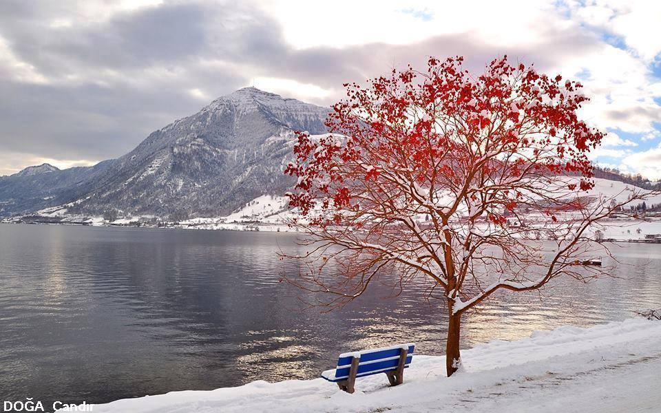 feuilles et neige