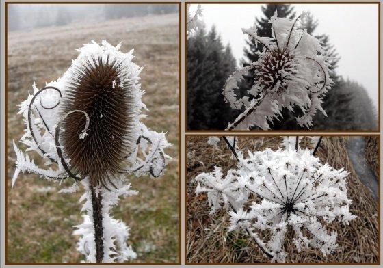 med-fleurs-d-hiver-visoflora-47597