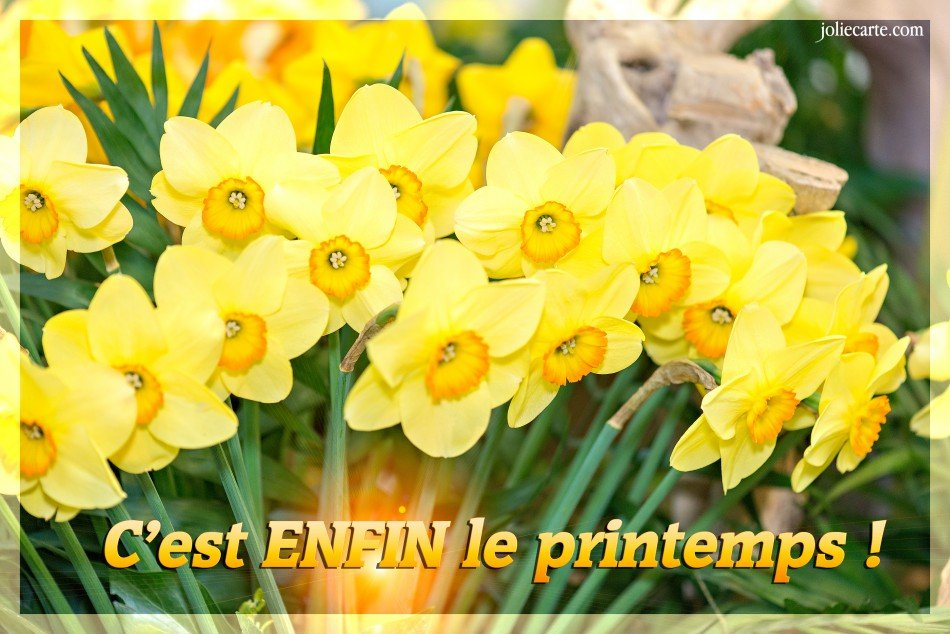 enfin-le-printemps