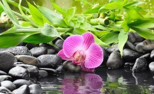 140299__orchid-orchid-flower-stone-black-bamboo-water-reflection_p