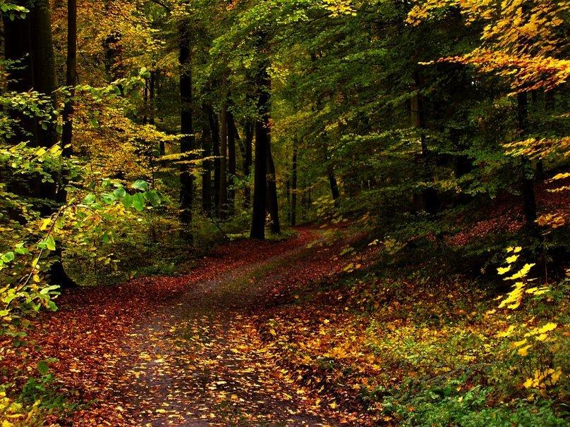 64917__forest-gimp_p